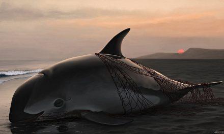 Mario Aguilar en la Comisión Nacional de Acuacultura y Pesca (Conapesca), entorpeció los esfuerzos para salvar a la vaquita marina.