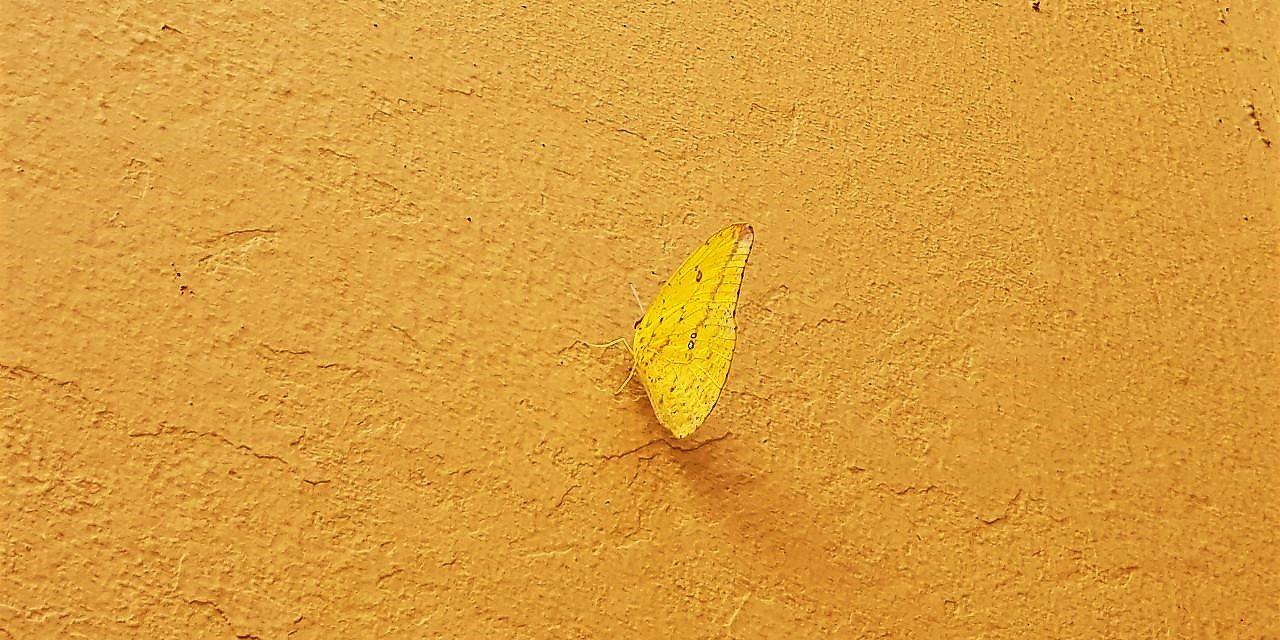 Invasión Amarilla