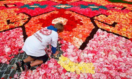 Guanajuato 'colorea' con flores plaza histórica de Bélgica