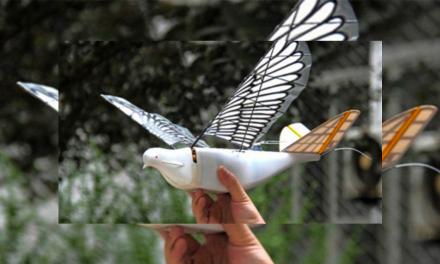 Vigila China a ciudadanos con paloma