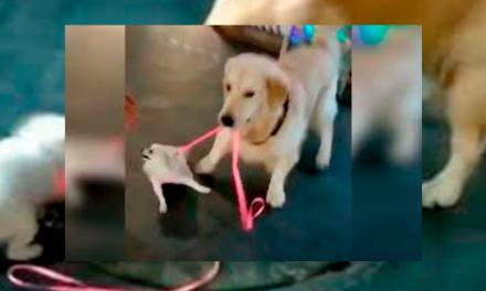 Un perro robándose otro perrito se hace viral