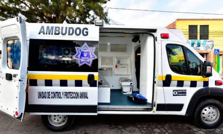 Ambudog, la primera ambulancia gratuita para perros de la calle