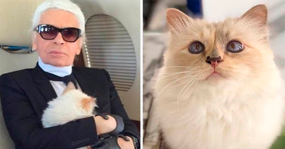 Una gata heredará fortuna de Karl Lagerfeld; modisto de Chanel