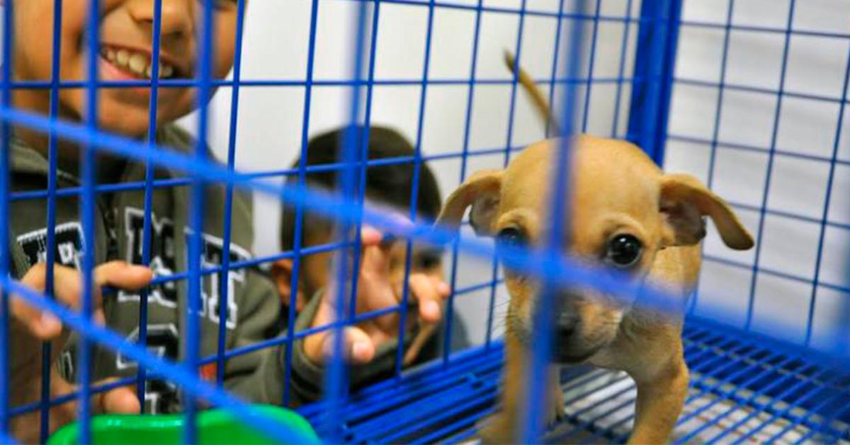 Inaugura San Nicolás Casa de Bienestar Animal