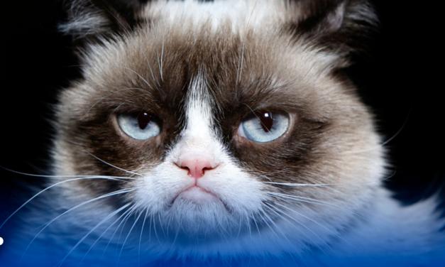Muere Grumpy Cat, la gata más viral