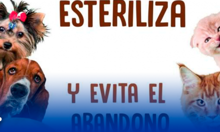 Promueve Santa Catarina esterilización de mascotas