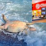 Piden boicotear a Cinemex por derrame de ácido en el mar cortés