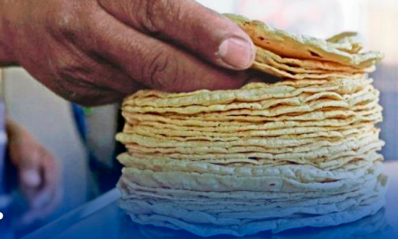 Un Kilo de tortillas puede llegar a costar 60 pesos, en caso de aprobarse la ley
