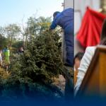 Diputada pide reciclar pinos navideños