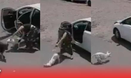 Mujer abandona a perrito discapacitado que no podía ni pararse en sus patitas 😢