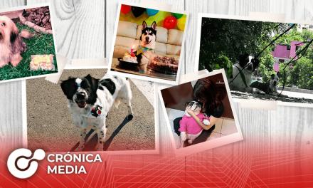 Hoy se celebra el Día Mundial Del Perro
