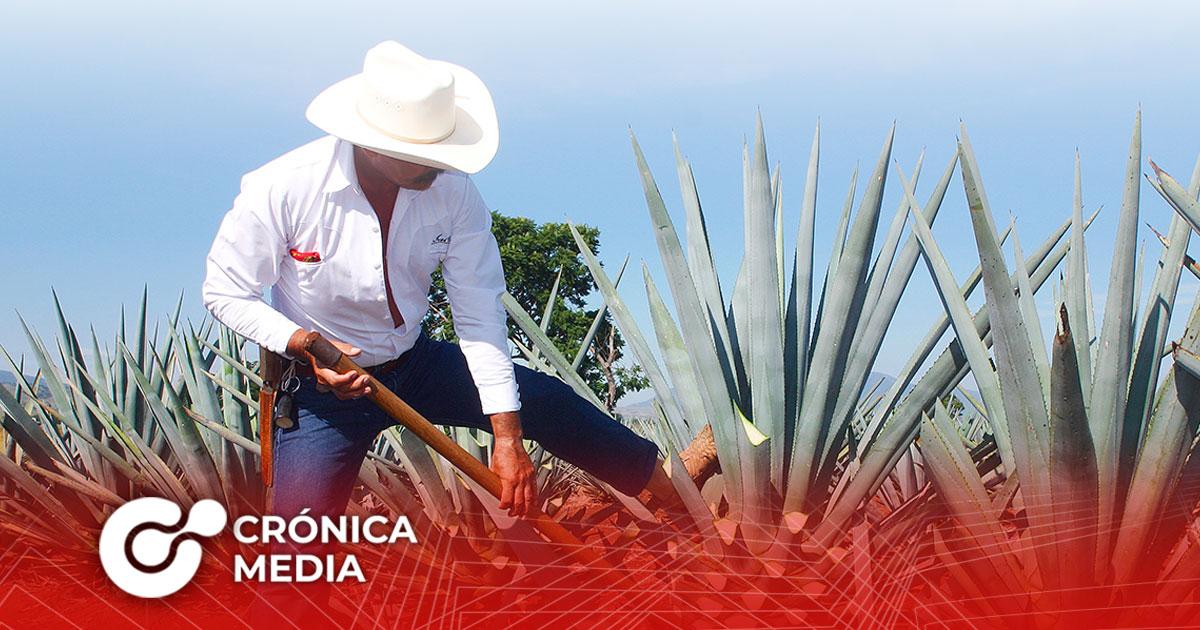 Hoy se celebra el Día Internacional del Tequila