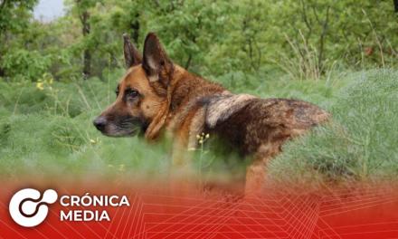Muere el primer perro en dar positivo por Covid-19 en Estados Unidos