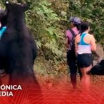 Autoridades atrapan al oso de Chipinque en una privada