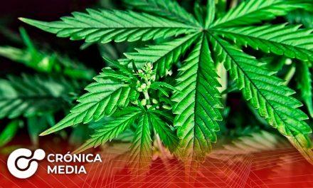 Uso lúdico de la Marihuana es aprobado por el Senado