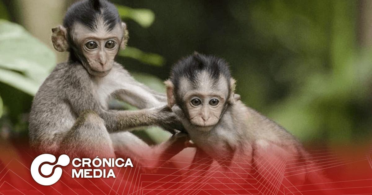14 de diciembre: Día mundial del Mono