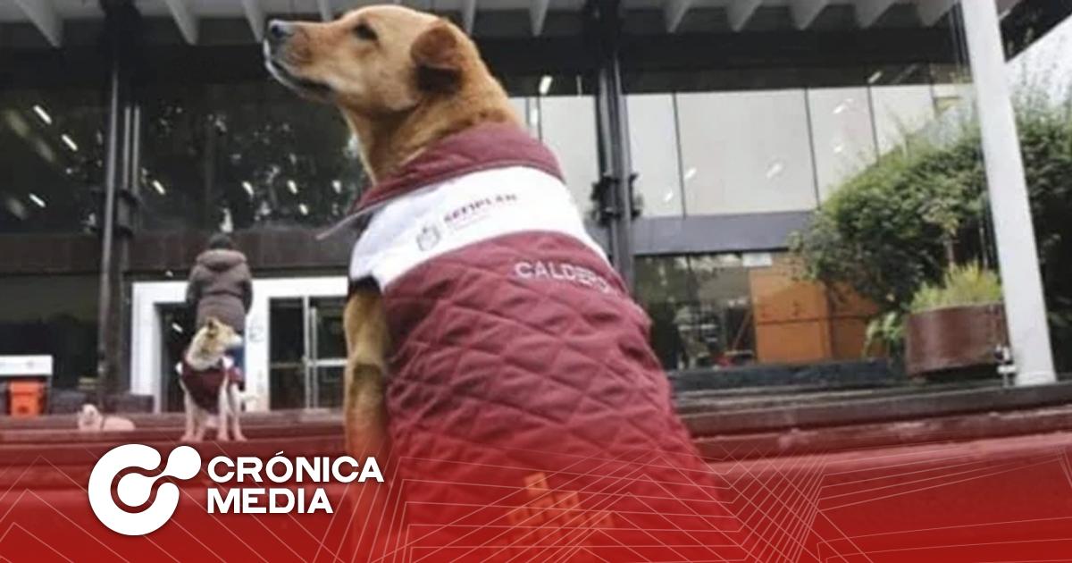 Secretaría de Finanzas de Veracruz pone chalecos a perritos por frío