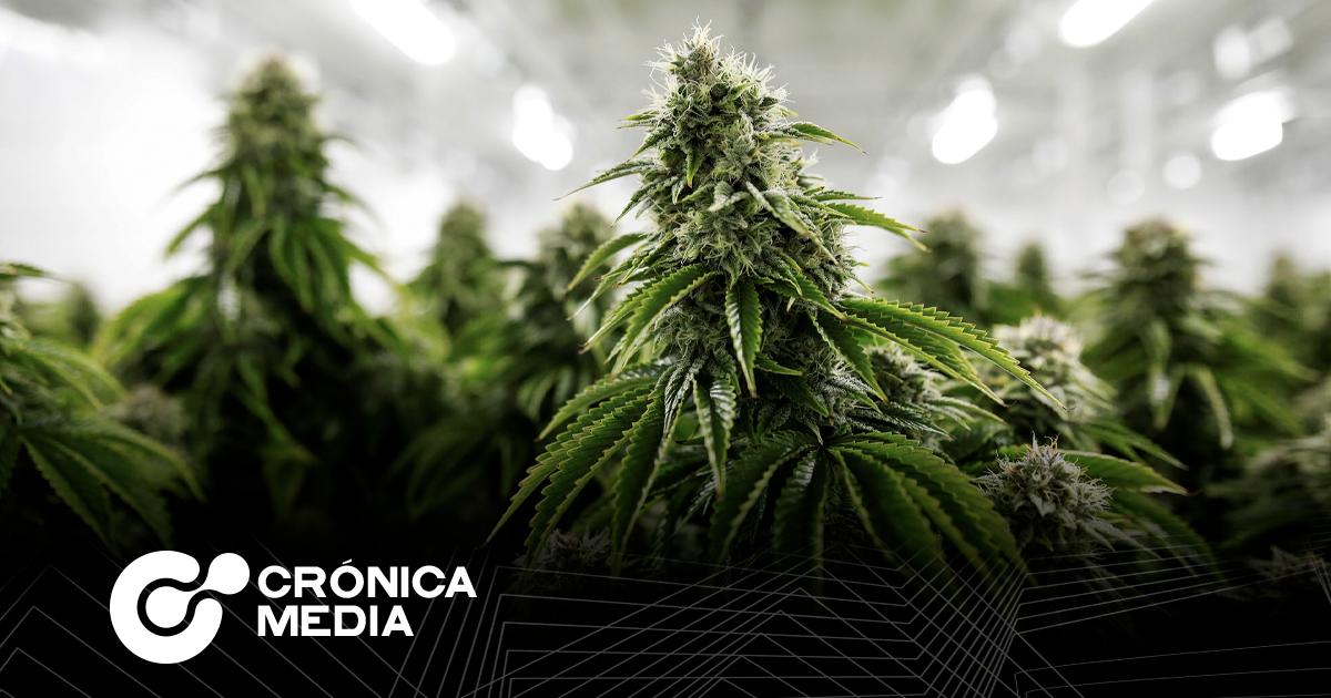 Aprobación de uso lúdico de Cannabis, pasa al pleno.