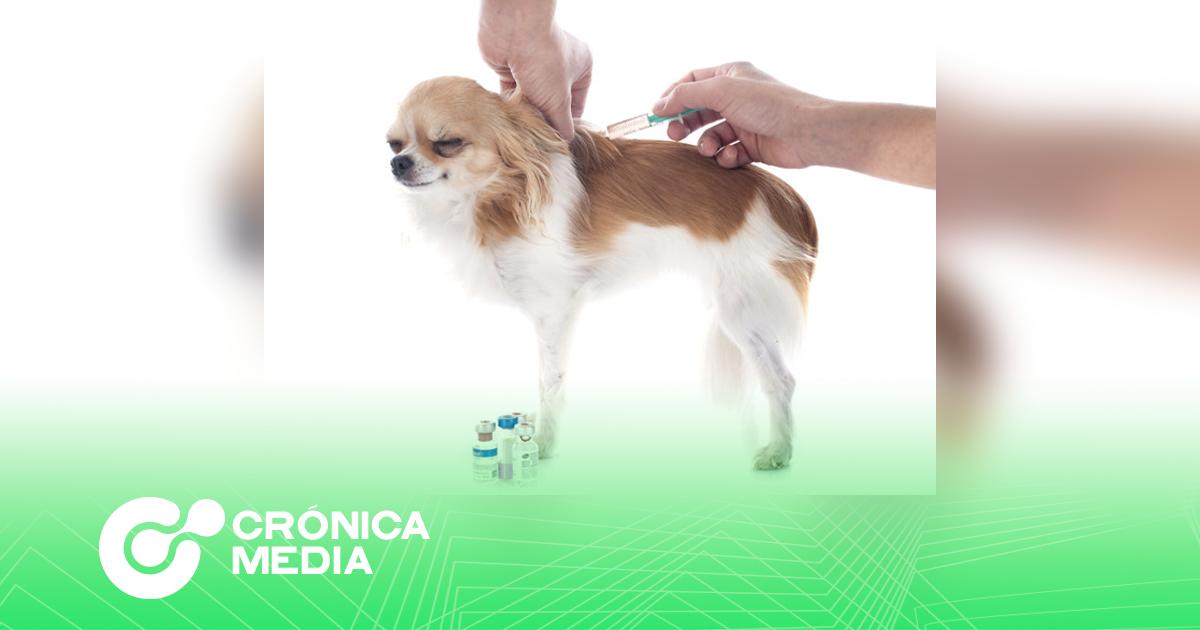 Rusia anuncia la primer vacuna anti Covid para animales