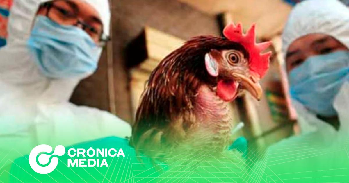 Detectan el primer caso de H10N3 en China