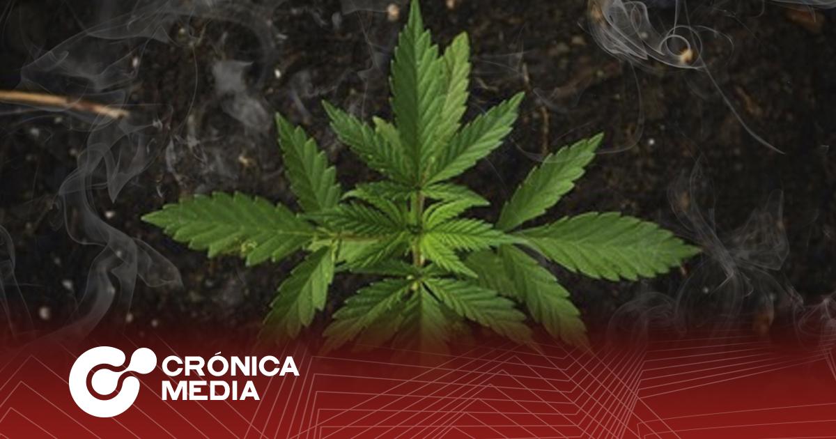 ¿Adiós a la prohibición de la marihuana?